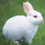 Talking Rabbit MOD (Talking Rabbit with removed ads and three) 1.1.8