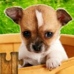 Dogs Jigsaw Puzzles Game MOD (Unlock All) 28.5